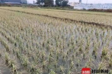有毒气体致村民倒地农作物20分钟枯干江西会昌回应